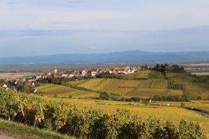 Sentiers viticole Ribeauville