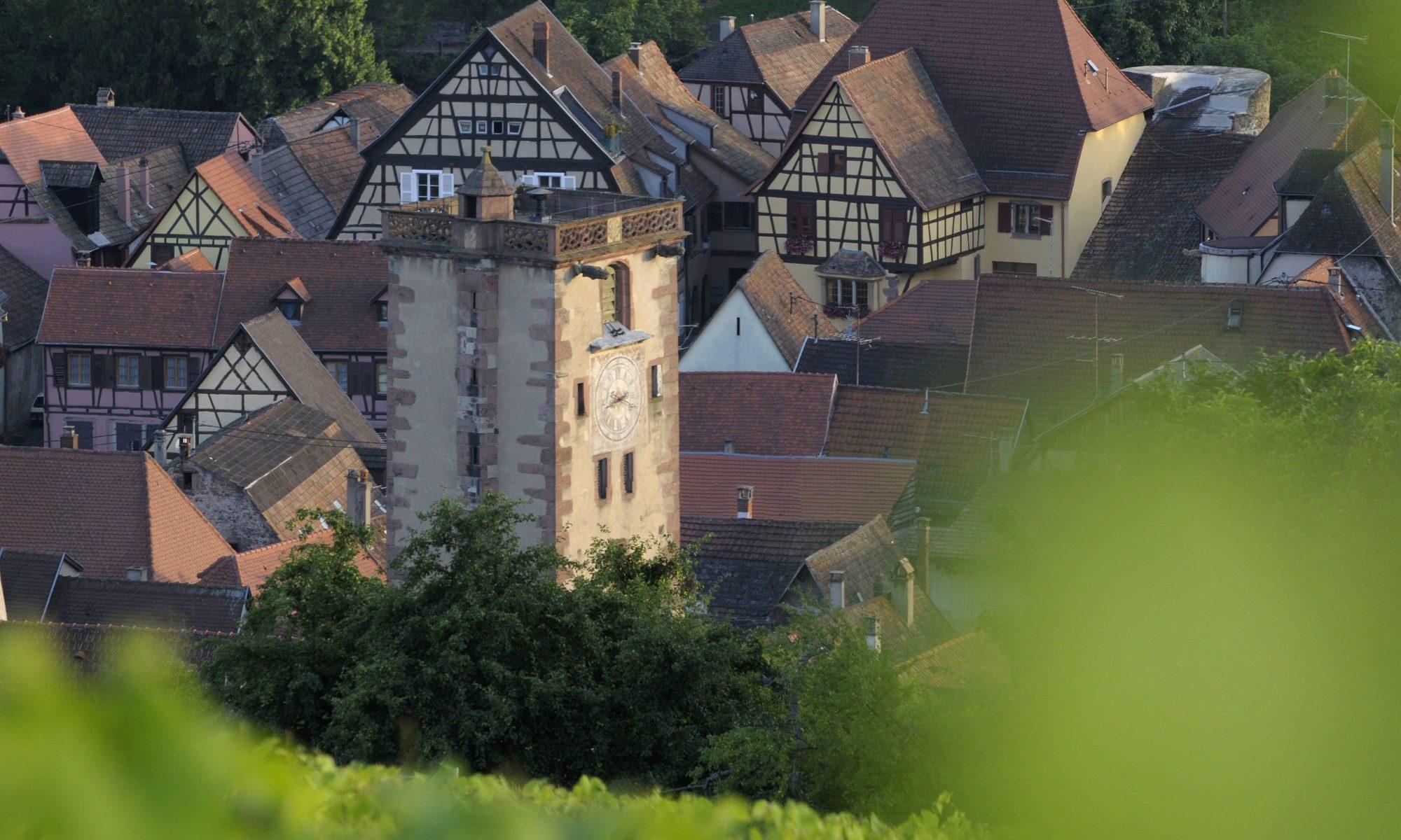 Vacances en Alsace Ribeauville vignoble